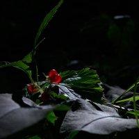 В лесу :: Алексей Петропавловский