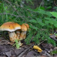 В осеннем лесу :: Татьяна Соловьева
