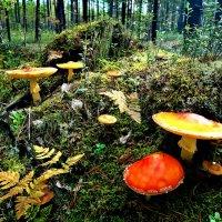 В осеннем лесу :: Алла ZALLA
