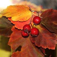 Осенние сережки.... :: Tatiana Markova
