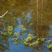 Певухинское болото в прошедшее воскресенье :: Зинаида Каширина