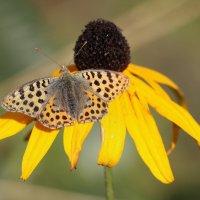 Бабочка :: ZNatasha -
