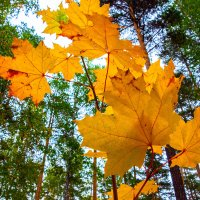 Осень,осень ... :: Serge Serebryakov