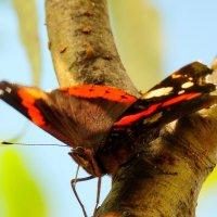 и ещё про бабочек  1 :: Александр Прокудин
