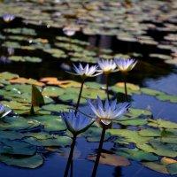 Цветы :: Валерий Баранчиков