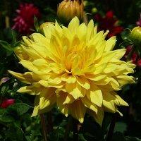 Солнечный цветок :: Лидия Бусурина