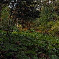 Прогулки в Осеннем Парке :: юрий поляков