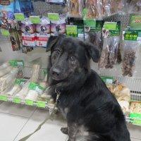 Собака из приюта,прекрасно живущая сейчас в семье. :: Зинаида