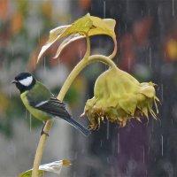 осенний дождь :: НАТАЛЬЯ