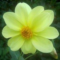 Осенние цветы :: Елена Семигина