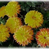Осенние солнышки.... :: Tamara *