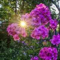 цветы любуются закатом :: Георгий А