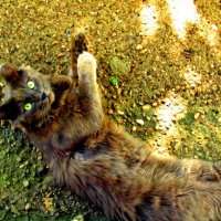 Изумление кота :: Милла Корн