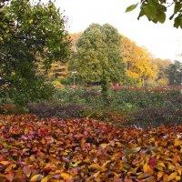Красивая осень :: Nikolay Monahov