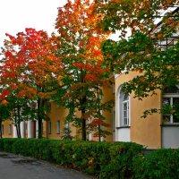 Осенняя палитра :: Владимир Морозов