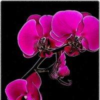 Грёзы розовой орхидеи :: Нина Корешкова