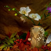 Орхидея :: Александр Белый
