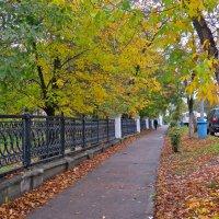 листья желтые... :: НАТАЛЬЯ