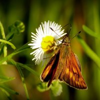 и ещё про бабочек...8 :: Александр Прокудин