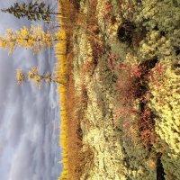 Осень в тундре. :: Лариса Красноперова