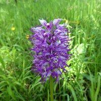 в гостях у дикой орхидеи :: Olga
