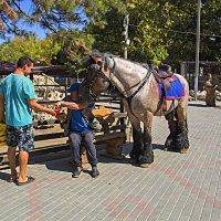 Яблочки для  лошадки :: Валентин Семчишин