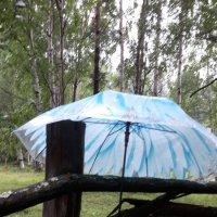 Дождливый день :: Наталья Тимофеева
