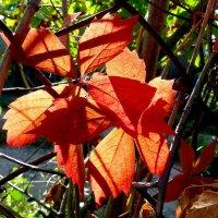 Подарила осень краски!... :: Лидия Бараблина