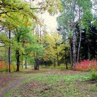 Осенний пасмурный день в Ал. парке ЦС - 2 :: Сергей