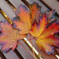 Начинается сезон красивых листьев... :) :: Ирина Via