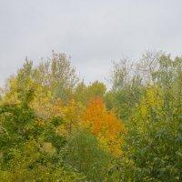 Осень в разгаре :: marmorozov Морозова