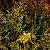 Осеннее растение :: Ксения OKDMUSE