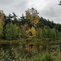Осень :: Елена Павлова (Смолова)