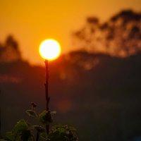 Солнечный фонарик :: Арина