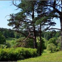 Эстония. Ландшафтный парк Тойла-Ору. :: Ольга Кирсанова