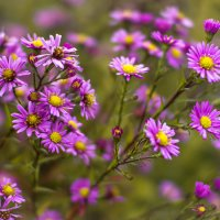 Осенние цветы :: Рома Григорьев