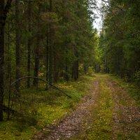Старая дорога :: Alexander Petrukhin