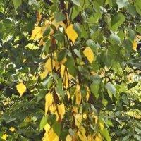 Золотая осень за окном :: Nikolay Monahov