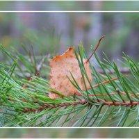 Осень, осень... :: Александр Широнин