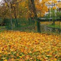 Осенний листопад :: Ольга Довженко
