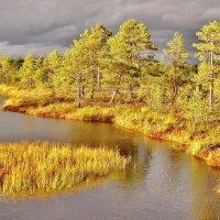 Осенью на болоте Виру :: Aida10