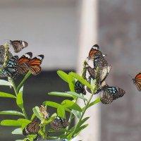 Бабочки :: Michael Mh MH100181
