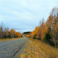 Дорога в осень :: Алла ZALLA