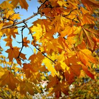 Как много света и цвета! :: Татьяна Помогалова