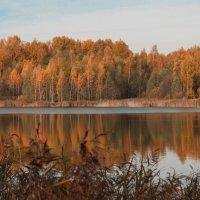 золотая осень :: Владимир Зеленцов