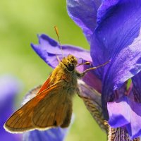 в мире бабочек 4 :: Александр Прокудин