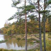 Осень на Ладоге :: Ирина