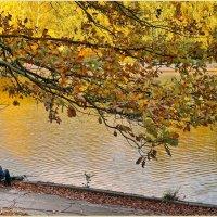 Осенняя красота :: Татьяна repbyf49 Кузина