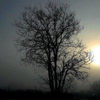 Раннее утро. :: Зинаида Каширина