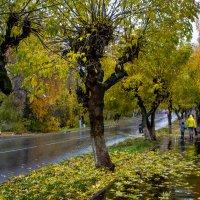 осень... :: Игорь